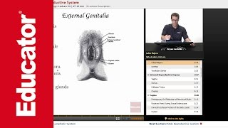 """Female Reproductive System"" 