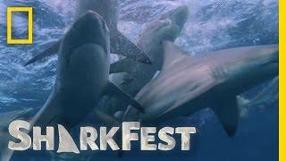 サメの大群2