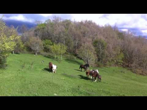 Video  Horse Boarding in Liberty Autor: Imgagen Miniatura Youtube