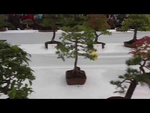One of the Worlds largest Bonsai Tree collections.