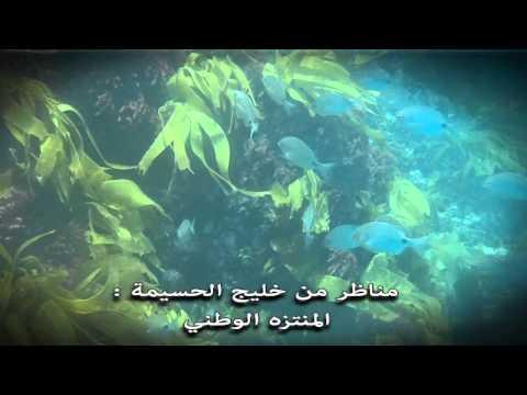 لقطات من تحت الماء بخليج الحسيمة -المنتزه الوطني-