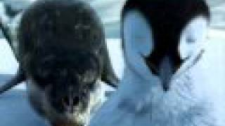 Punjabi Totay Penguins Da Shugal HD Watch And Download