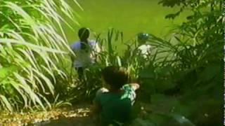 Sucuri Pega Criança No Lago De Palmas