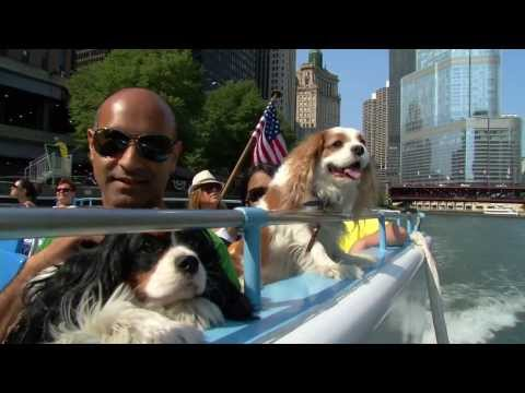 Thumbnail image for 'Chicago Canine Cruise on WGN Radio'