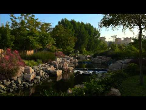 Dubai's Garden