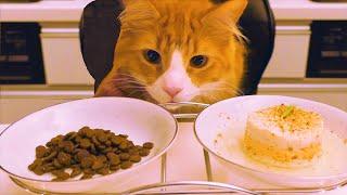 Store Cat Food vs Homemade