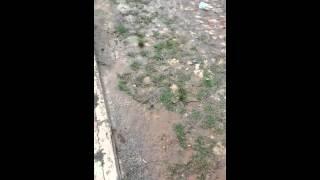 Flagrantes de vazamento de �gua em MG