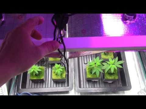 CFL GROW LIGHTS/VEG lights/GROW LIGHT/T5/Fluorescent lights/Cannbis grow/DIY Grow lights