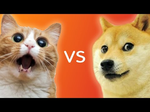 Dog And Cat Fighting   Dog VS Cat Funny Fights Compilation