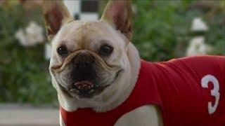 Najlepšie reklamy so psami