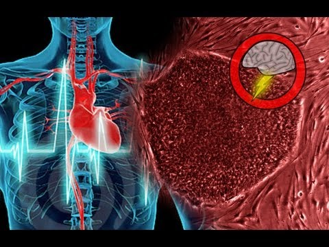 Heart Regeneration WITHOUT Stem Cells (Brainstorm Ep154)