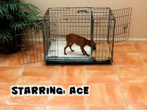 puppy apartment potty training house training a puppy in