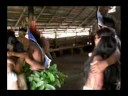 ritual of caapi (ayahuasca)
