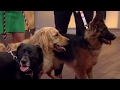 Dogs cancer detection abilities rise to new heights