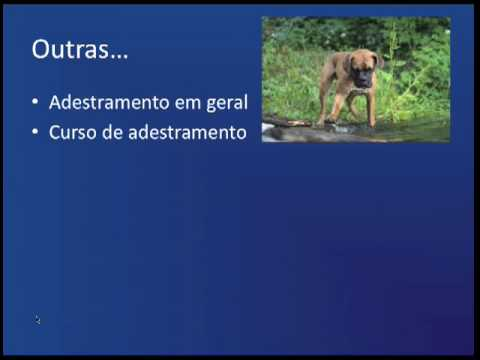 [Adestramento de Cães] 1- Video Resposta (parte 1)