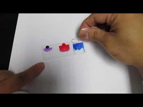 微生物簡單染色