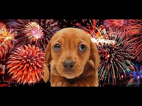 05/11/2018 - Proibição de fogos de artifício que causem poluição sonora, como estouros e estampidos