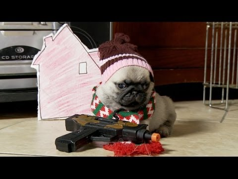 Thumbnail of video Home Alone (Pug Puppy Version)