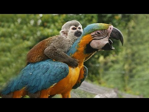 FUNNY PARROTS || Funny BIRD Videos Compilation