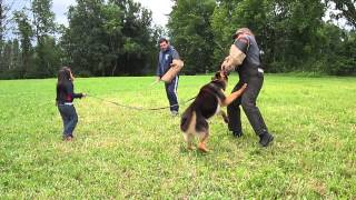 5 YEAR OLD YEAR OLD GETTING PROTECTED BY HER GERMAN SHEPHERD FROM 2 BAD GUYS . view on youtube.com tube online.