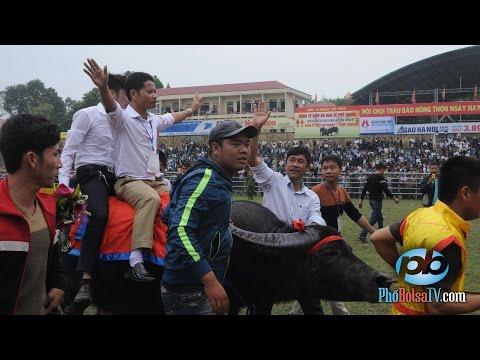 Lễ Hội Chọi Trâu ở Bắc Ninh: Truyền thống hay dã man?