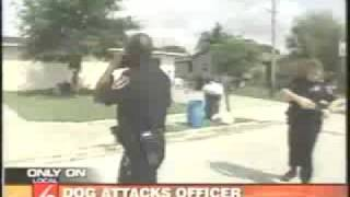 Aggressive Dog Tasered By Cop