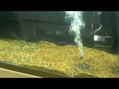 African Cichlid breeding setup part 2