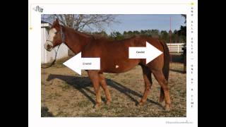 Equine veterinary terms (directions) explained.wmv view on youtube.com tube online.