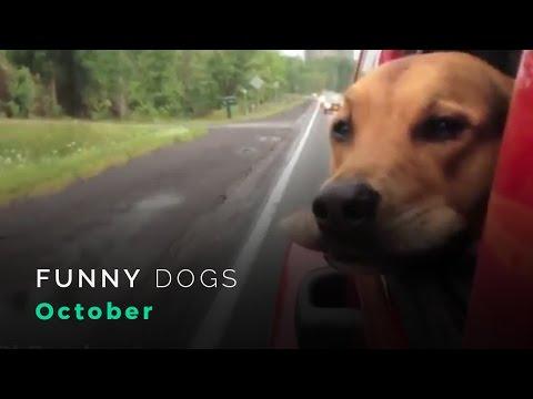 Cachorros engraçados | Outubro | 2012, DOGS