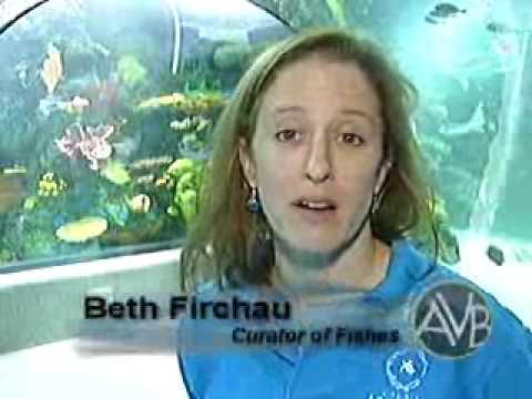 Virginia aquarium coupons 2019