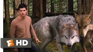 Twilight: Breaking Dawn Part 2 (3/10) Movie CLIP A Wolf