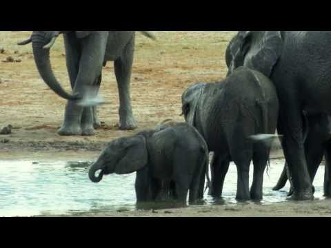 Chengeta Wildlife Fundraising Video