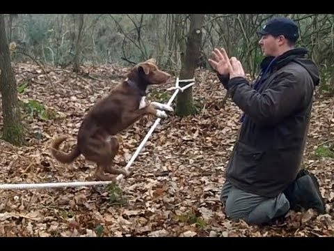 Amazing Acrobatic Dog - Slackline