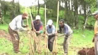Tsegaye Seme - Saboy Sim ሳቦይ ስም (Guragigna)