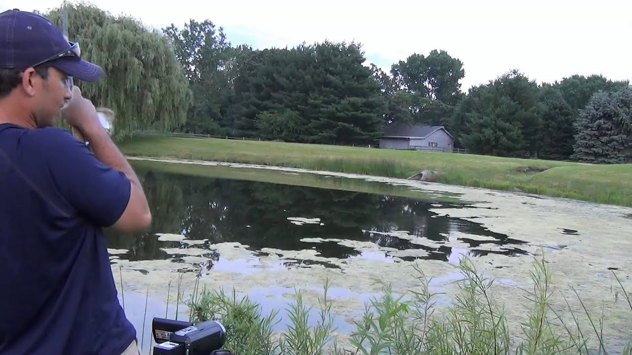 Pond bass fishing summer weeds topwater frogs youtube for Best bait for pond fishing
