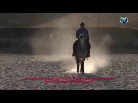 Correção de Cavalos de Vaquejada TRAILER