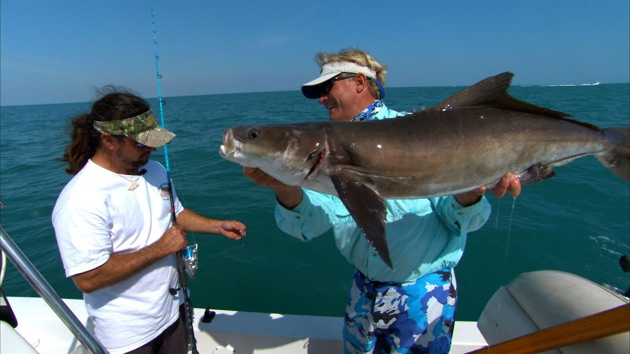 Cocoa beach cobia best eating fish on the planet youtube for Best eating fish