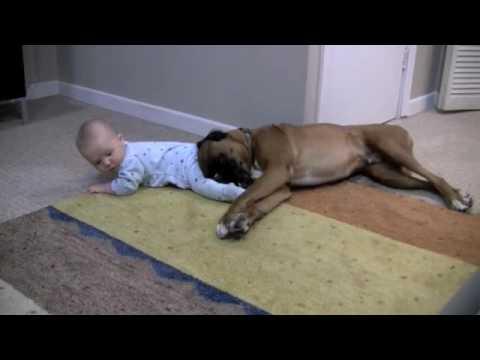 Bokser usvojio bebu