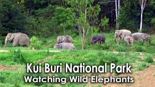 Elephant Watching, Kui Buri National Park