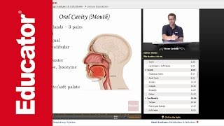 """""""Digestive System""""   Anatomy & Physiology with Educator.com"""