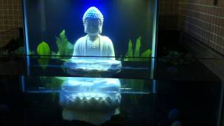 All comments on open bottom fish tank buddha youtube for Buddha fish tank