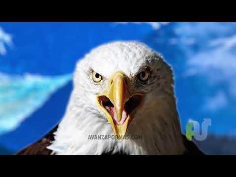 ANIMACIÓN - El Águila Adolescente - Reflexiones Cristianas Cortas para Jóvenes