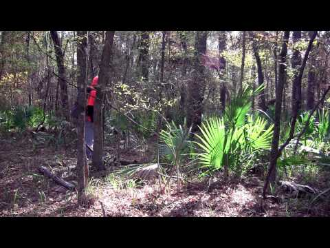 Backpacking and Hammock Camping on Vulture Island, wild camping tips and vulture information