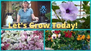 Seed Starting How To Grow From Seed Wave Petunias- Pansies