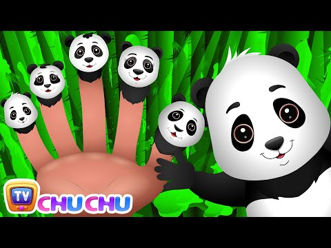 Panda Finger Family | ChuChu TV Animal Finger Family Songs & Nursery Rhymes For Children