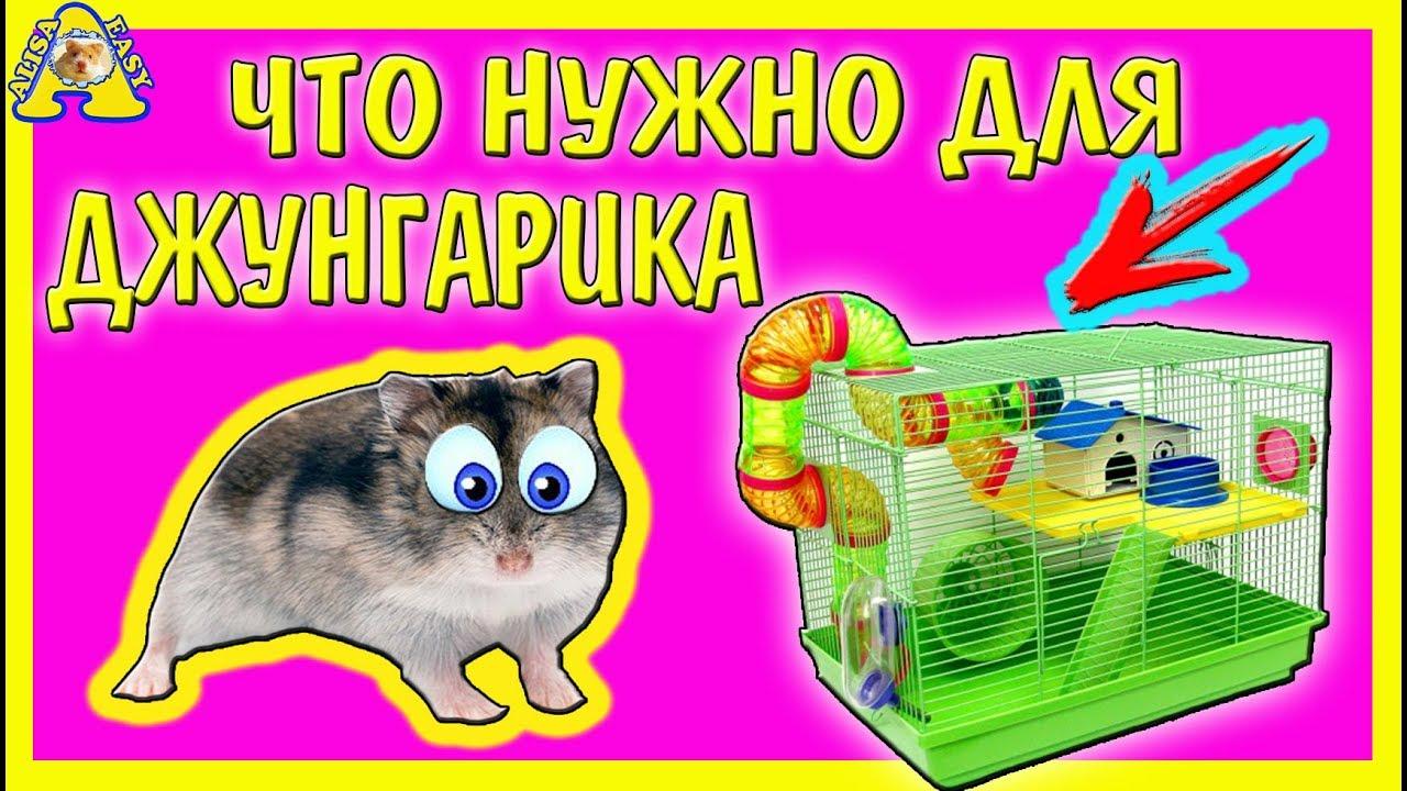 Optimeal - корм для кошек, купить в Киеве с доставкой по