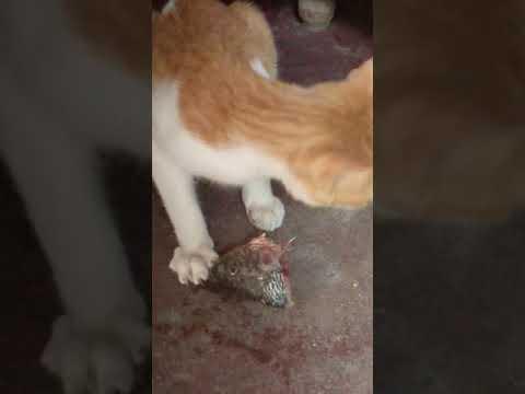 Funny cat steals fish