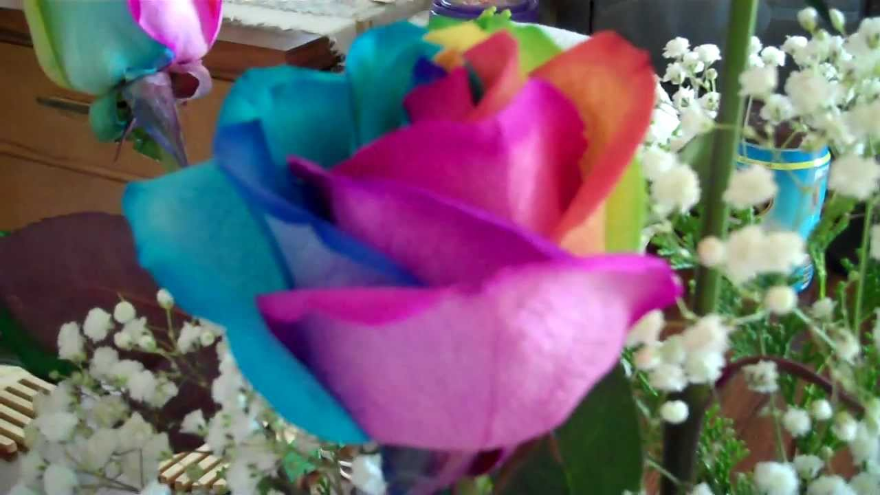 Rainbow colored roses youtube for Rainbow colored rose