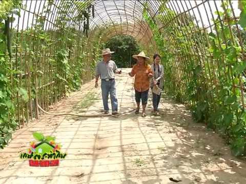 เกษตรทำกิน ช่วงรวยด้วยมือ 28-04-56