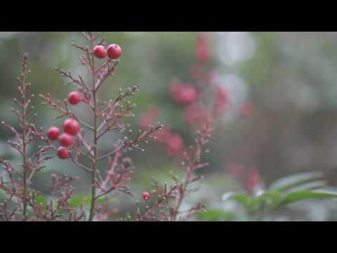 Red. Video-Sample | Canon 7d mark ii | Sigma 18-35mm 1.8 DC